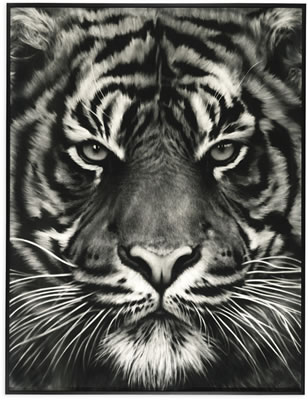 Robert Longo-UNTITLED (TIGER HEAD, NO. 8)