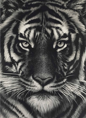 Robert Longo-Untitled (Last Tiger)